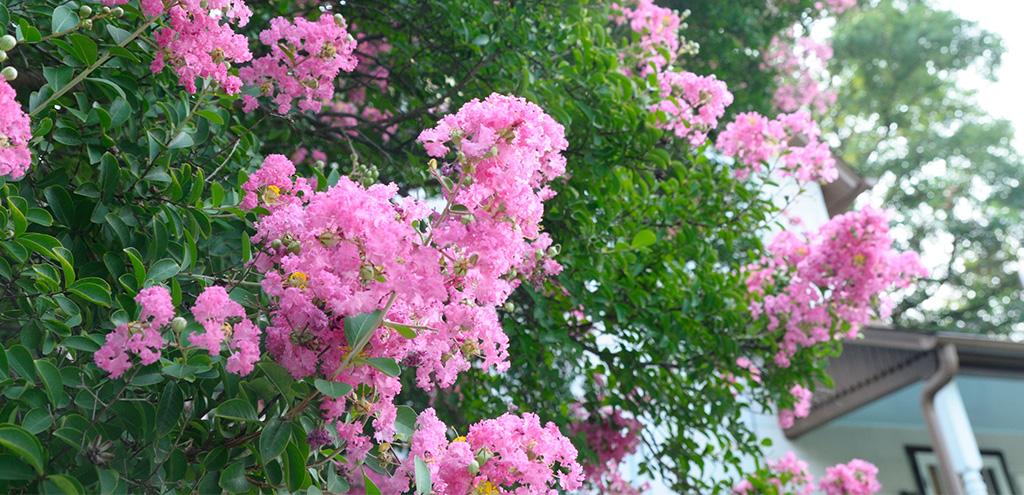 Flowering DC Trees