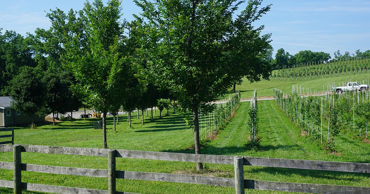 blue skies at the farm